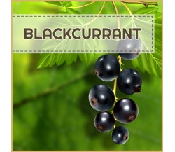 Royal Ribes (Blackcurrant) - AROMA 12ml