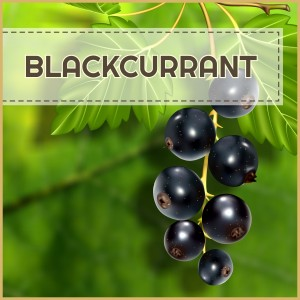 Royal Ribes (Blackcurrant) - AROMA 12ml