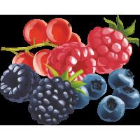 Gyümölcs Aroma